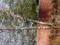 wood0980.jpg