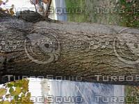 wood0982.jpg