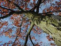 wood0987.jpg