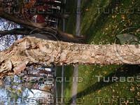 wood1007.jpg