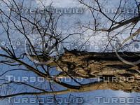 wood1011.jpg