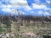 Canberra_Bushfire_Regrowth_04.zip