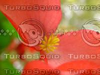 FLOWER CHRYSANTHEMUM 06