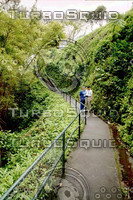 Hawaii Lush Trail.jpg