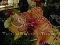 Orchid P Baldwin