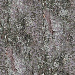 Tree-Bark-2.bmp
