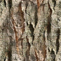 Tree-Bark.bmp