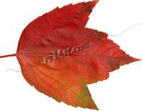 leaf_0705.png