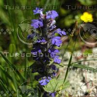 macn004_purpleflower.jpg
