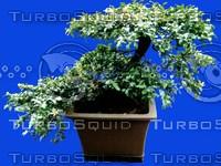 plant136.jpg