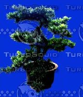 plant143.jpg