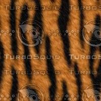 tiger512.bmp