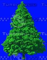 tree003.jpg