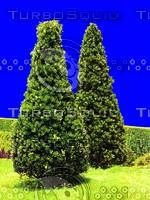 tree030.jpg