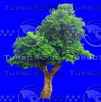 tree034.jpg
