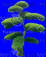 tree074.jpg