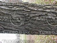 wood0010.jpg