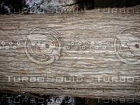 wood0113.jpg
