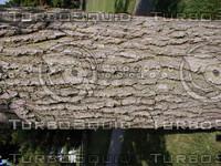 wood0137.jpg