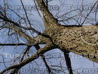 wood0140.jpg