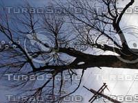 wood0148.jpg