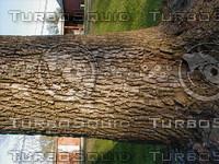 wood0211.jpg