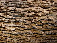wood0213.jpg