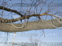 wood0220.jpg