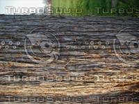 wood0251.jpg