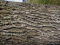 wood0346.jpg