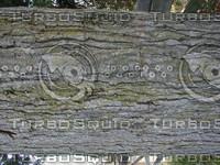 wood0626.jpg