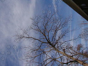 wood0717.jpg