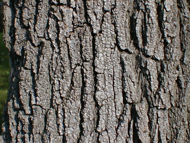 Wood 0756 Tree Bark Stock Photo