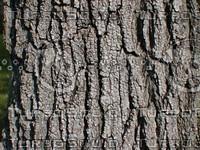 wood0756.jpg
