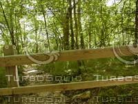 wood0791.jpg