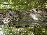 wood0806.jpg