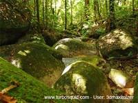 Australia forest 002.jpg