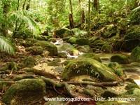 Australia forest 004.jpg