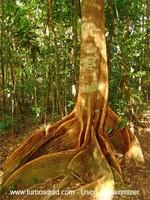 Australia forest 006.jpg