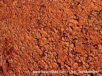 Australia ground 001.jpg