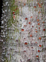 Dangerous tree 0094.JPG