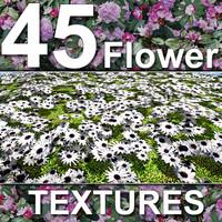 45_Flower_Textures.zip