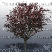 JTX_TREE004.psd.zip
