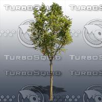 JTX_TREE005.psd.zip