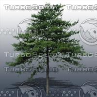 JTX_TREE006.psd.zip