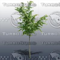 JTX_TREE007.psd.zip