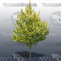 JTX_TREE009.psd.zip