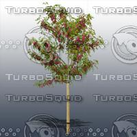 JTX_TREE010.psd.zip