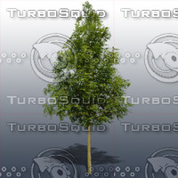 JTX_TREE012.psd.zip