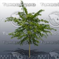JTX_TREE013.psd.zip